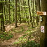 Einstieg zum Tobi Trail